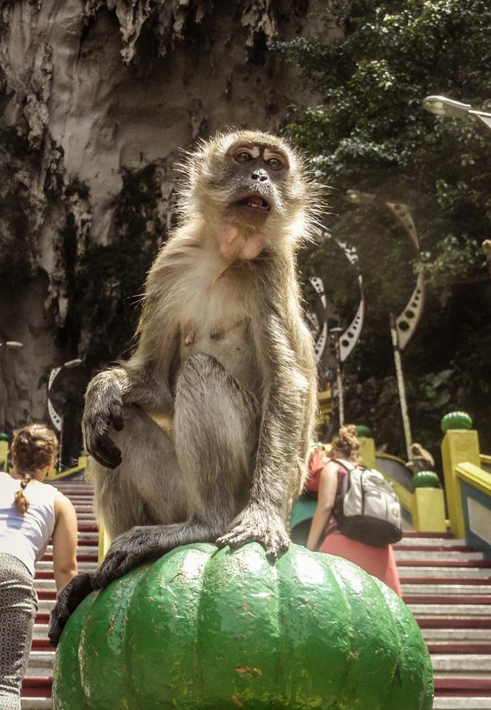Monkey Batu caves Kuala Lumpur Malaysia