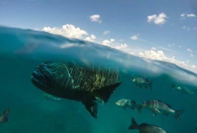 Great Barrier Reef Australië - Australia